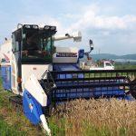 小麦の刈り取り作業中!